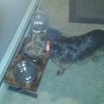 Custom dog dish stand