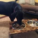 Tyne's custom dog dish stand