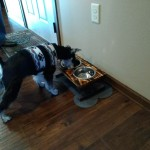 Dog dish stand and Bach